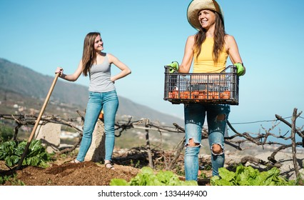Young women harvesting organic fruits in community greenhouse garden - Happy people at work picking up organic vegetarian food - Focus right girl face - Agriculture and ealthy lifestyle concept