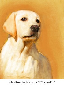 A young yellow labrador oil portrait