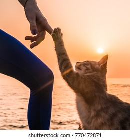 Young Yoga Woman in Bodysuit Having Fun With a Cat on the Beach at Amazing Sunrise. Take Five Cute Cat