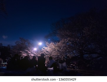 Yoyogi, Tokyo / Japan - March 31st 2019: Japanese people and tourists enjoying the hanami season in Yoyogi Park by night in Tokyo, dringink under the cherry blossom trees.