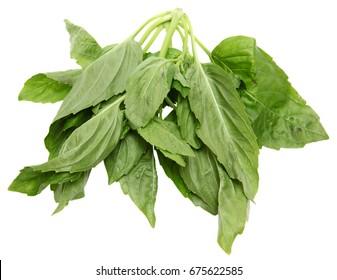 Yu Choy Leaf bundle over white.