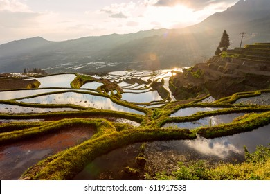 Yuanyang rice terrace from Duo Yi Shu village,  Yunnan province, China