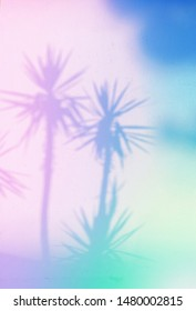 Yucca palm trees shadows on the wall with trendy multicolored neon toning.