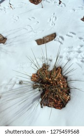 Yucca plant and animal tracks in the snow