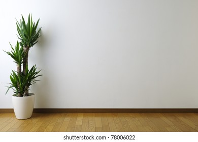 Yucca in white room