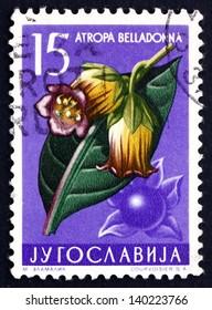 YUGOSLAVIA - CIRCA 1957: a stamp printed in the Yugoslavia shows Belladona, Atropa Belladonna, Perennial Herbaceous Plant, Deadly Nightshade, circa 1957