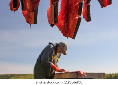 Yukon Territory, Alaska. Local fisherman  cleaning Chum Salmon and cleaned salmon on a drying rack.