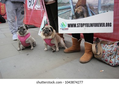 yulin dog festival protestors Chinese New Year, year of the dog at: Trafalgar Square, London, February 2017. stock, photo, photograph, picture, image