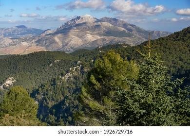 Yunquera pinsapar (abies pinsapo) in the Sierra de las Nieves national park and mountain Prieta and Cabrilla in Malaga. Andalusia, Spain