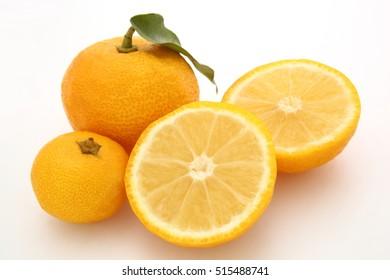 Yuzu aromatic citron in white background/ Yuzu aromatic citron