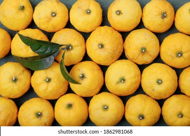 Yuzu citrus fruits, yellow yuzu berries,