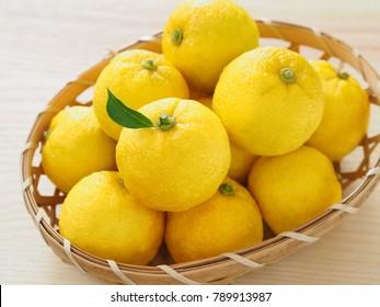 Yuzu (Japanese citron)