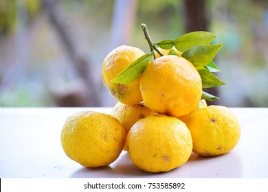 yuzu this is South Korea citron.