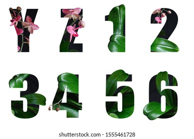 y,z and 1,2,3,4,5,6 made of Real alive flowers with Precious paper cut shape of letter. Collection of brilliant flora font for your unique decoration in spring, summer many concept idea