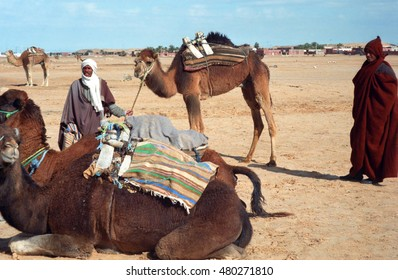 ZAAFRANE, TUNISIA - FEBRUARY 4 : Bedouins with camels on 4 February 1996 at Zaafrane, Tunisia. Camels are the main transportation for the Bedouins in the desert.