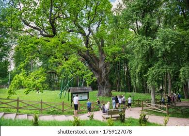 Zagnansk, Poland - June 13, 2020: Tourists admiring Bartek Oak, one of the oldest oaks in Poland, natural monument.