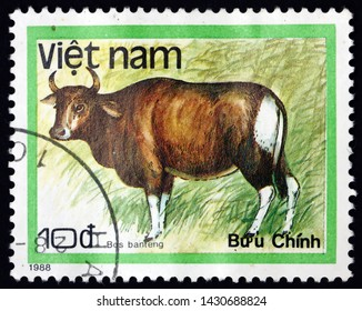 ZAGREB, CROATIA - JUNE 12, 2019: a stamp printed in Vietnam shows banteng, bos javanicus, is a species of wild cattle found in Southeast Asia, circa 1988