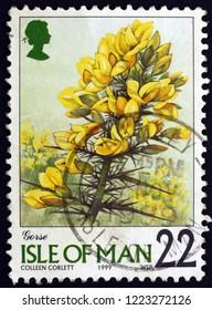 ZAGREB, CROATIA - NOVEMBER 1, 2018: a stamp printed in Isle of Man shows Gorse, ulex europaeus, is flowering plant, circa 1999
