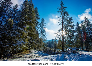 Zakopane -  ski resort in Poland.Wonderful  winter forest. Tatry  mountains.