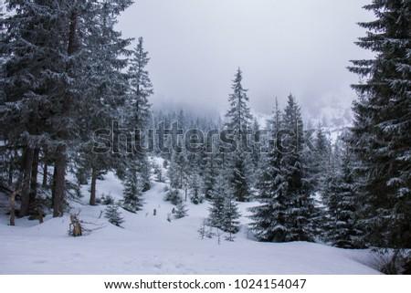 Zakopane Ski Resort Tatry Poland Stock Photo Edit Now 1024154047