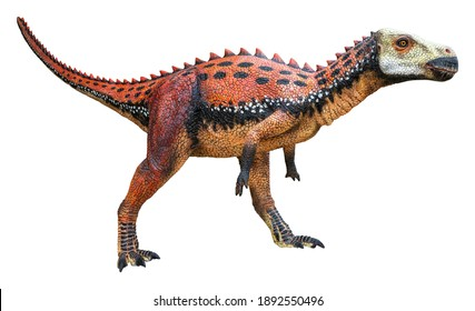 Zalmoxes is an extinct herbivore genus of Rhabdodontid Ornithopod dinosaur from the Late Cretaceous, Zalmoxes isolated on white background with a clipping path