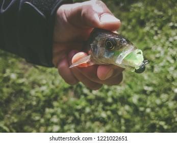 Zander fishing on river