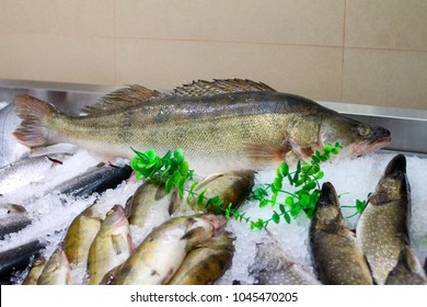 zander  Fresh fish on ice with a price tag. On the market
