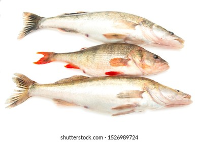 zander and perch fish on a white background