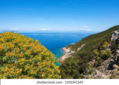 Zannone, Isole Ponziane, Latina district, Latium, Italy, National Park of Circeo,  view of Capo Negro with the lighthouse, in the background the Latium coast, in the foreground Euforbia