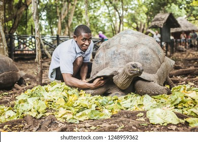 ZANZIBAR - January 2018: Tortoise caretaker feeding a giant tortoise in the farm on Prison island, Zanzibar, Tanzania