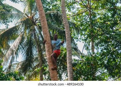 ZANZIBAR, TANZANIA - February 15, 2016: Man butterfly climbs on the palm trees, Nungwi, Kendwa, Zanzibar island, Tanzania