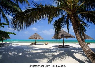 Zanzibar Umbrellas and palm trees on the  Beach