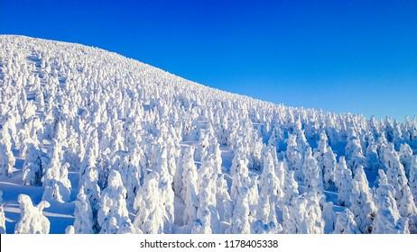 Zao Onsen Ski Resort and Snow Monster, Yamagata, Japan