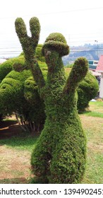 Zarcero / Costa Rico - May 3, 2019: A self-portrait topiary carved by the master topiary sculptor Evangelista Blanco in Zarcero, Costa Rico.