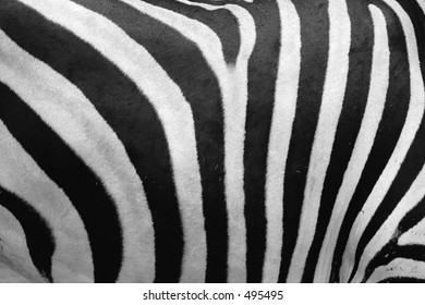 A zebra abstract