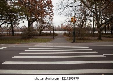 zebra crossing in new york city