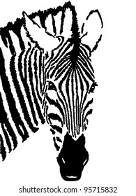 zebra drawing,white background