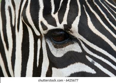 A zebra face up close.  Makes a nice background.