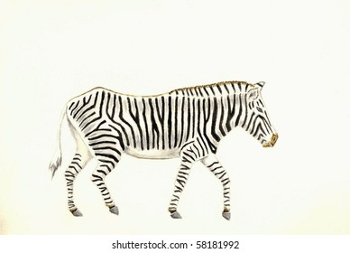 Zebra (Full View)