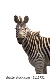 Zebra isolated on white (Zebra at Chobe Game Reserve)