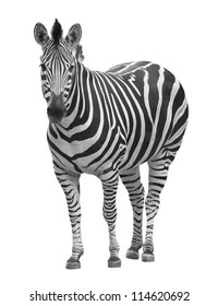 zebra on white with clipping path