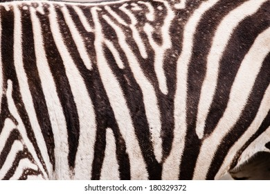 Zebra pattern or texture or background