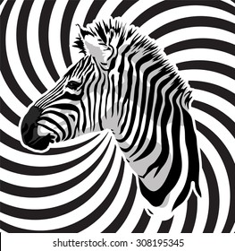 Zebra portrait on abstract strips background.