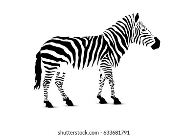 Zebra. Silhouette of black stripes.