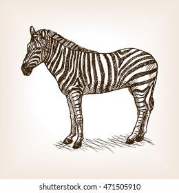 Zebra sketch style raster illustration. Old engraving imitation.