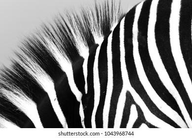 Zebra skin pattern
