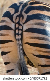 Zebra stiped bottom and tail with black and white features up close and full frame