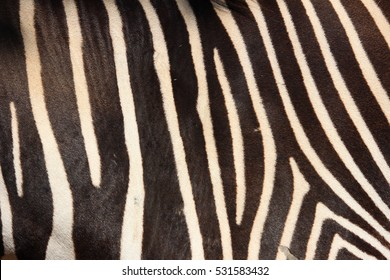 Zebra Stripes, Natural Colours