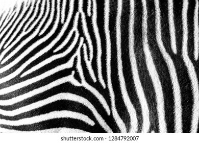 Zebra stripes pattern wallpaper