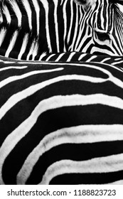 Zebra strips with patterns